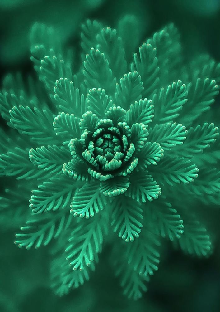 Plakat - Conifer Green (S040008SA4)