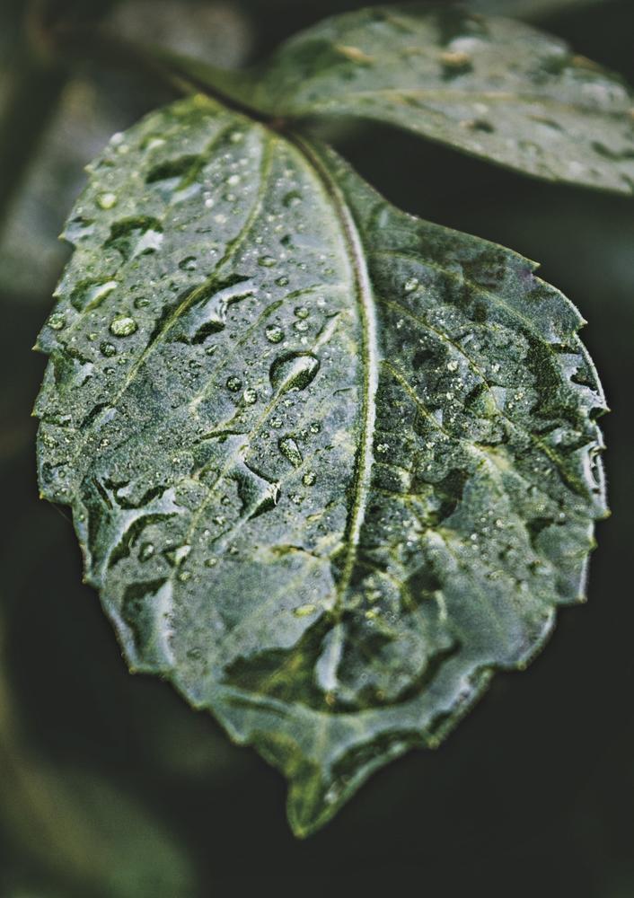 Plakát - List po dešti (S040021SA4)