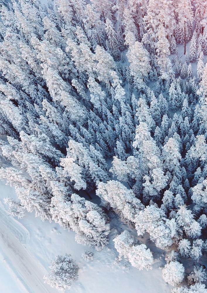 Plakat - Snježna šuma (S040022SA4)