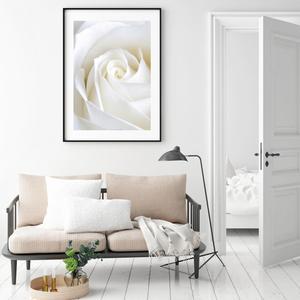 Plakát - Něžná růže (S040001SA4)