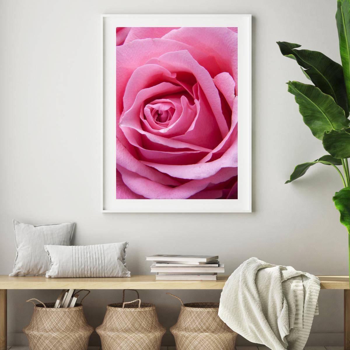 Plakat - Ružičasta ruža (S040005SA4)