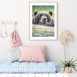 Plakát - Odpočívající medvěd (S040006SA4)