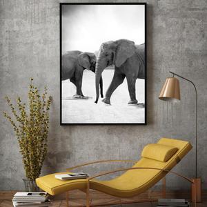 Plakát - Sloni jdoucí naproti (S040010SA4)