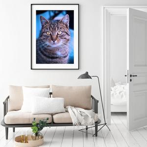 Plakát - Mourovatá kočka (S040011SA4)