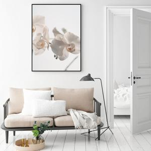 Poszter - Fehér orchidea (S040024SA4)